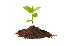 Rastlina - životné poistenie