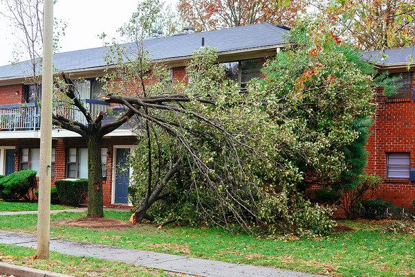 Padnutý strom